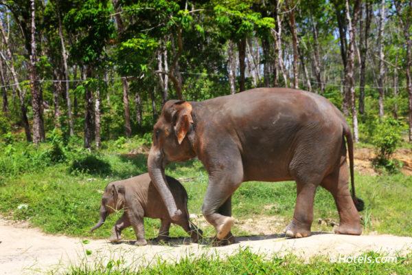 Thailande-Elephants -Asie